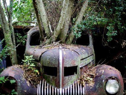 Взыскание убытков за поврежденный деревом автомобиль